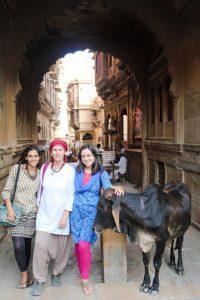 Cow Sacred India