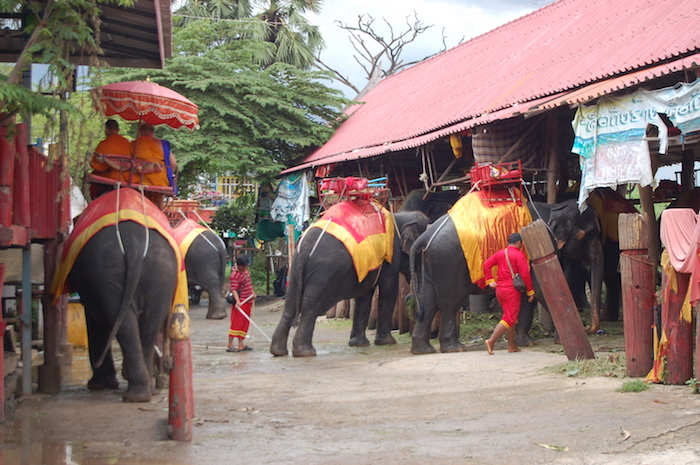Monks riding elephants in Ayutthaya