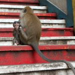 Baby monkey with its mom in the entrance of the Batu Caves