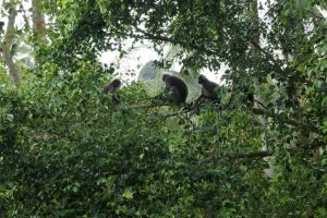 Monkeys seen from our window