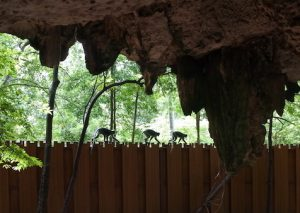 Stalactites and monkeys